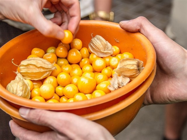 Also known as the cape gooseberry fruit, the little golden uchuva berries are one of the latest superfood crazes, and with good reason: a 100g (four-ounce) serving of uchuva contains less than 55 calories, loads of protein, and vitamins B, D12 and C. Uchuva contains so much vitamin D, in fact, that you can get around 40% of your daily requirements with a relatively small three-cup serving of the little berries.