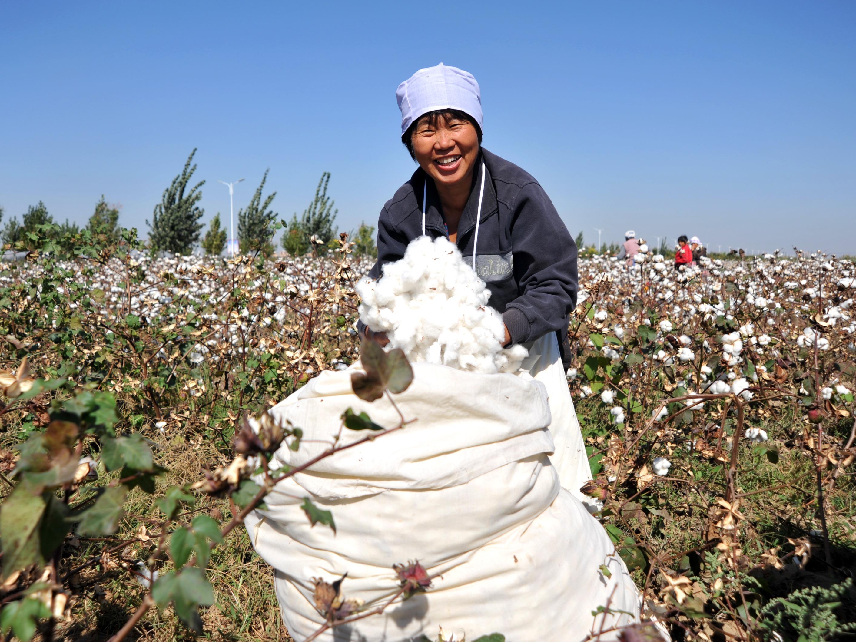 Cotton Production in Thousand Metric Tonnes: 6,532