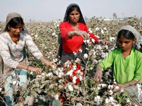 Cotton Production in Thousand Metric Tonnes: 2,308