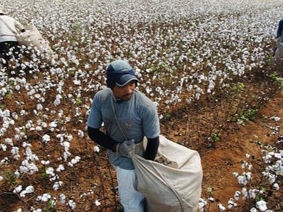 Cotton Production in Thousand Metric Tonnes: 1,524