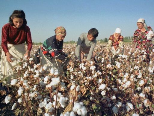 Cotton Production in Thousand Metric Tonnes: 849