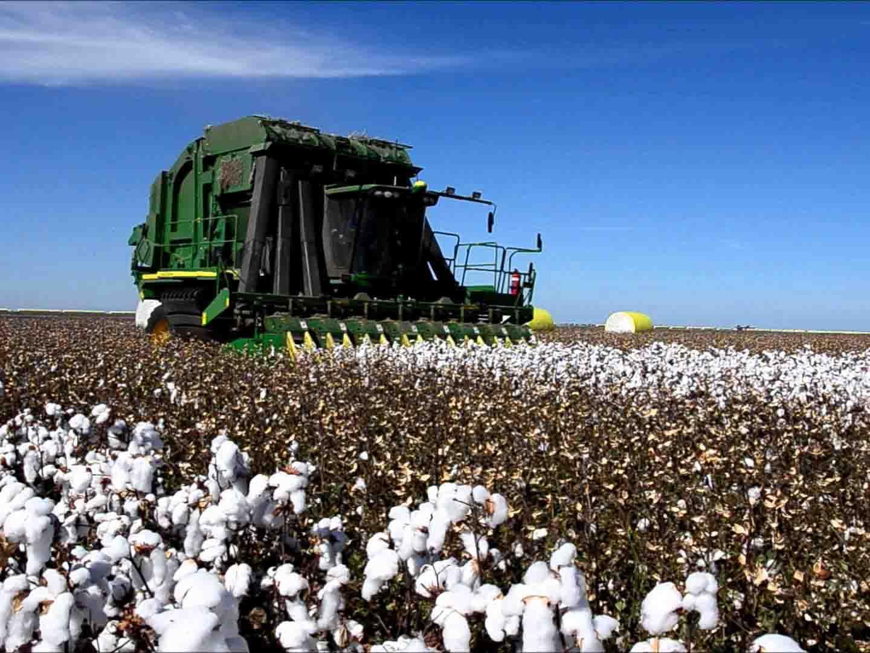 Cotton Production in Thousand Metric Tonnes: 501
