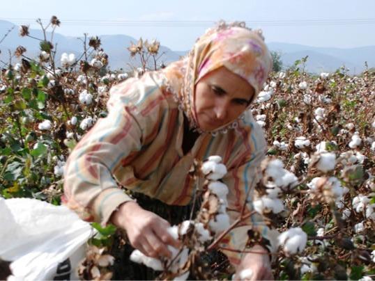 Cotton Production in Thousand Metric Tonnes: 332