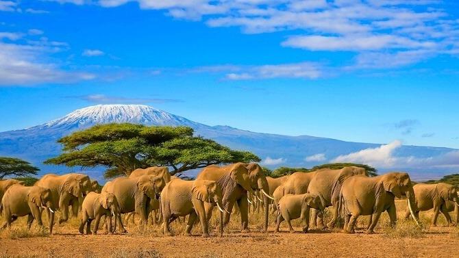 Mount Kilimanjaro or just Kilimanjaro ( /ˌkɪlɪmənˈdʒɑːroʊ/),[7] with its three volcanic cones,